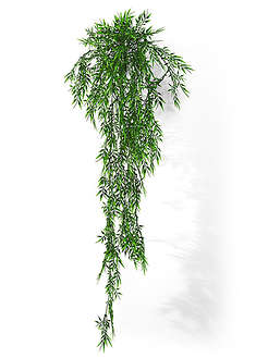 Dekoracyjny bambus-bpc living