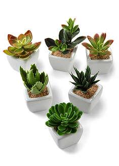 Plante suculente artificiale (set 6 buc.)-bpc living